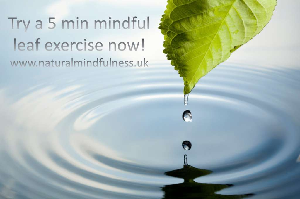 The Natural Mindfulness Leaf Exercise