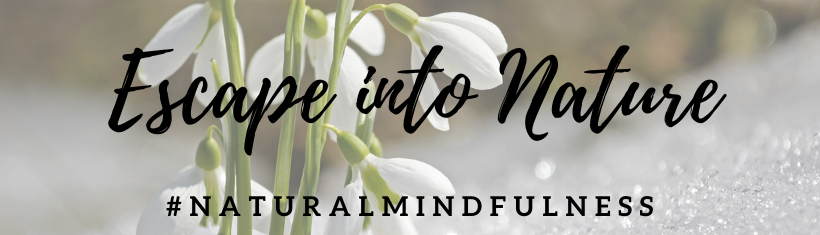 Cotswold Natural Mindfulness & Forest Bathing